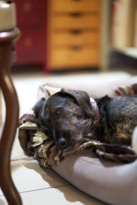 AURIM André Kröger Goldschmied Hund Ginger im Human Posture Blog